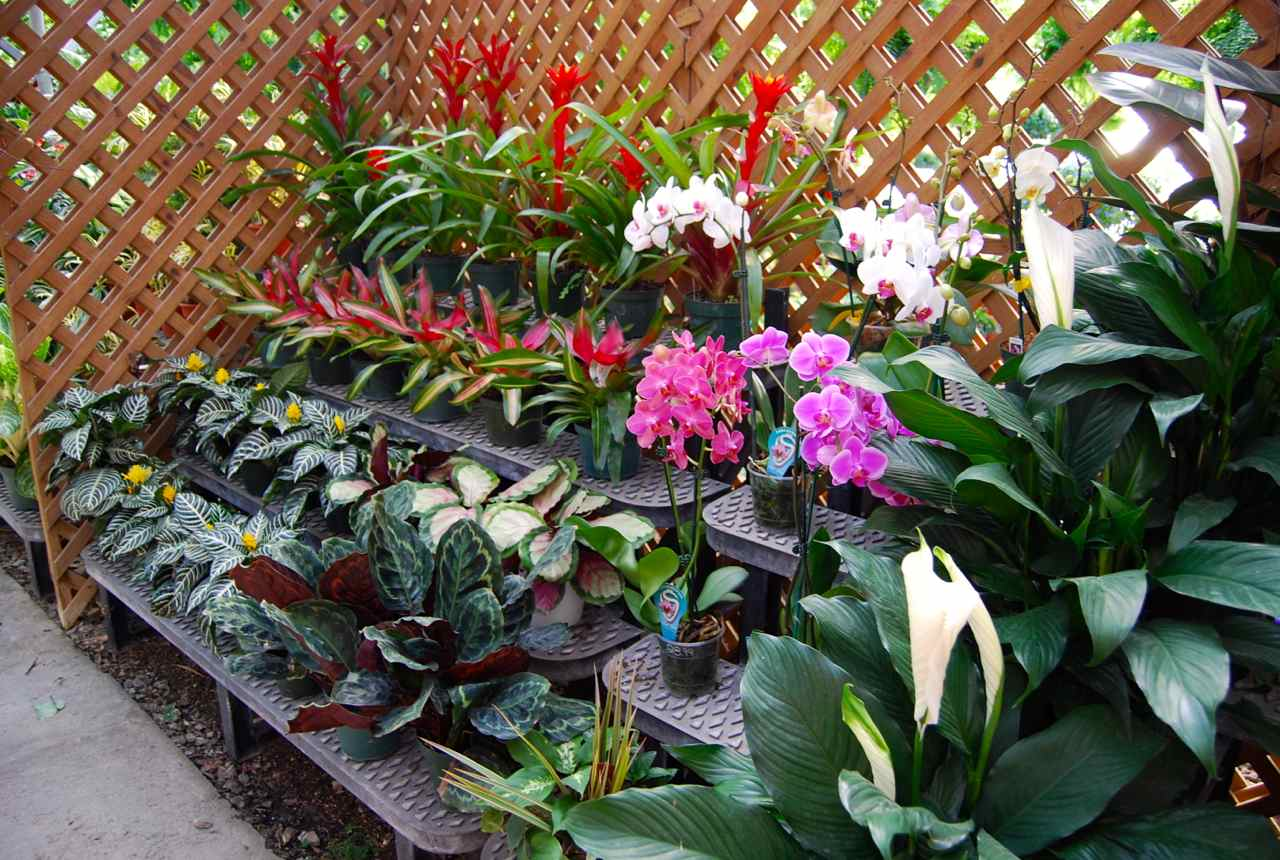 floral greenhouse, botany greenhouse, snow greenhouse, outdoor greenhouse, bonsai greenhouse, gardening greenhouse, white greenhouse, horticulture greenhouse, conservatory greenhouse, tree greenhouse, green greenhouse, indoor greenhouse, vegetable greenhouse, plants greenhouse, spring greenhouse, weed greenhouse, tropical greenhouse, container greenhouse, nursery greenhouse, home greenhouse, on houseplant greenhouse